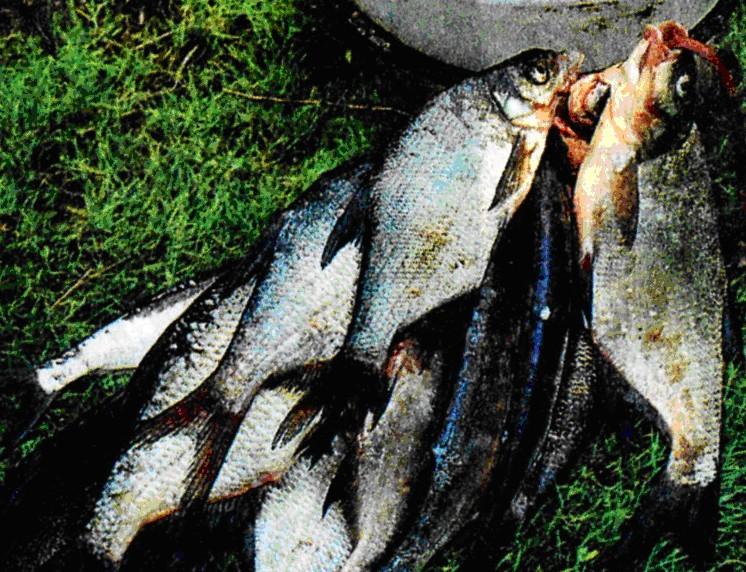 ноттингемская ловля